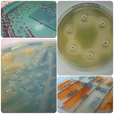 Microbiology - Bacteriology