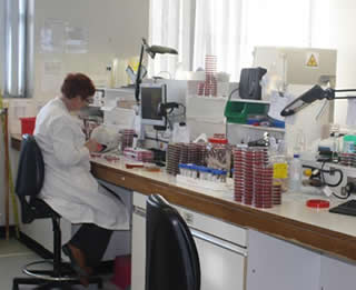 Microbiology - Bacteriology Department